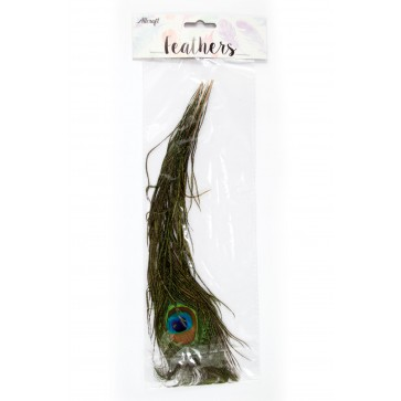 Peacock Feather 30cm (3 Pack)